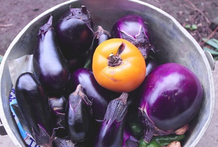 野良土産の「秋野菜たち」。(30.9.26)