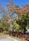 ホテルの庭園は、秋真っ盛り…。(30.10.3)