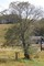リフトわきに立つ、「ヤマナシ(山梨)」の木。(30.10.3)