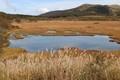貴重な自然・八島湿原。(30.10.3)