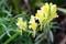 近寄って採った「土手の黄色の花」(30.10.6)