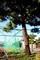 裏の市有地に立つ「三様の松・リギダ松」。(30.10.8)