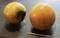 佐久で採れた、甘い「甘柿「。(30.10.10)