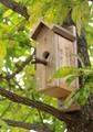 クヌギ(櫟)に取り付けられた、「シジュウカラ用の巣箱」(30.10.16)