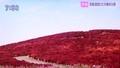 テレビ・「ひたちなか国定公園」の紅葉。(30.10.29)
