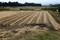 我が家の田んぼも、コンバイン・稲刈りが済んで。(30.10.20)