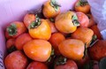 「柿」の収穫。(30.10.27)