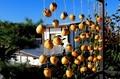 朝日を浴びる「吊るし柿」。(30.10.28)
