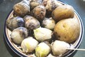 小粒の里芋は、「衣被(きぬかつぎ)」に…。(30.10.30)
