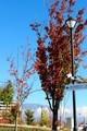 「ひろば・紅葉の木々」の間に「浅間山」。(30.11.1)