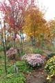 「賢治ガーデン・山の小径」は、紅葉が見頃…。(30.11.9)