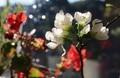 早くも花開いた「ボケ(木瓜)」と、「ベゴニア」の花。(30.11.12)