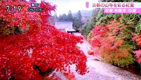 テレビ中継、京都・神護寺の紅葉。(30.11.12)