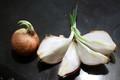 芽が出始めた「玉葱」の分球。(30.12.11)