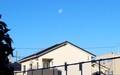 夜が明けても、西空に残る「十八日のお月さま」(30.12.25)(8:05)