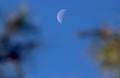 西空高く、「二十三夜待」のお月さま。(30.12.30)(9:09