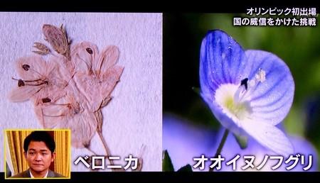 テレビ画像、金栗四三がストックホルムで摘んだ、野草の押し花」(31.1.