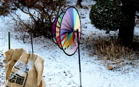 雪が舞った庭先。(31.1.9)