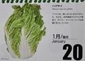 『北海道 花暦』、20日は「ハクサイ」。(31.1.20)
