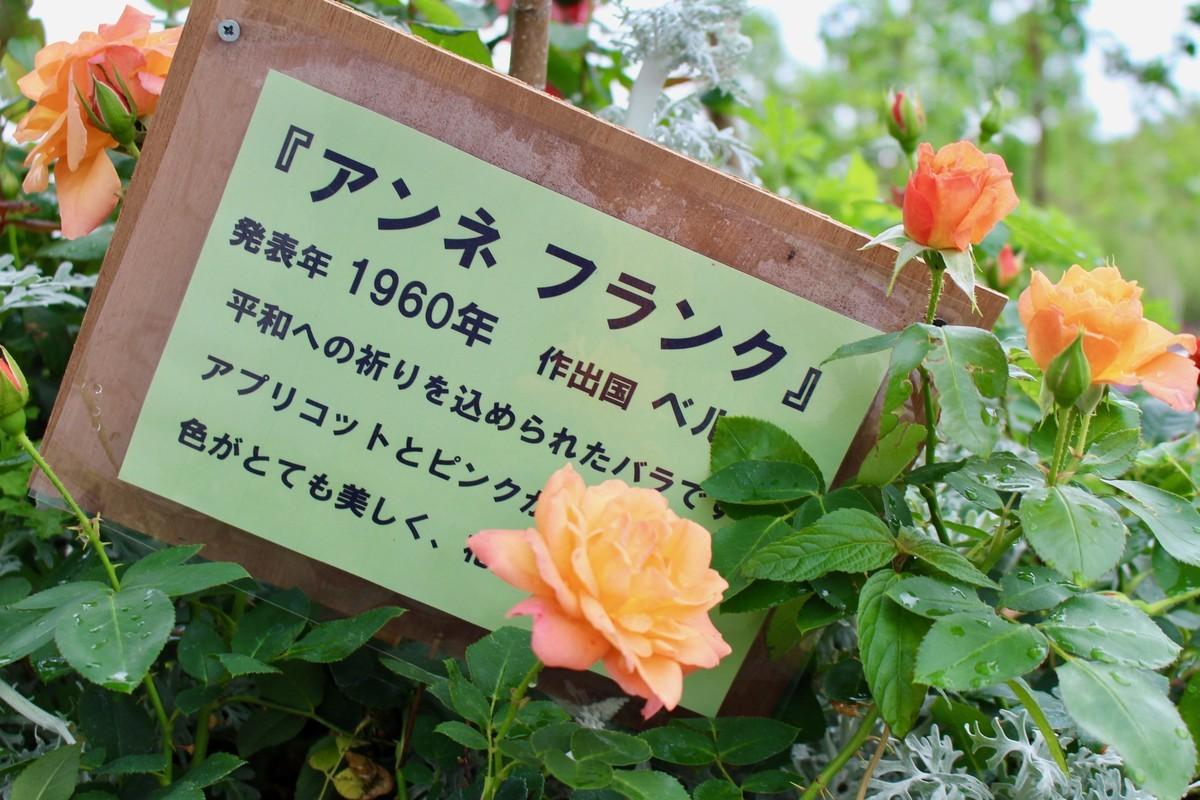 f:id:yatsugatake:20190610102812j:plain
