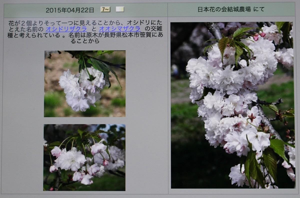 f:id:yatsugatake:20190611150502j:plain