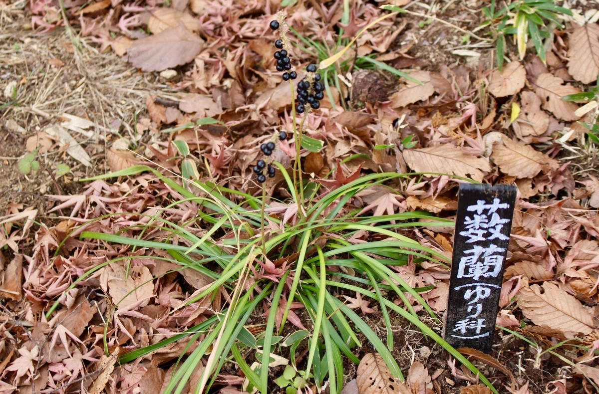 f:id:yatsugatake:20191207135907j:plain