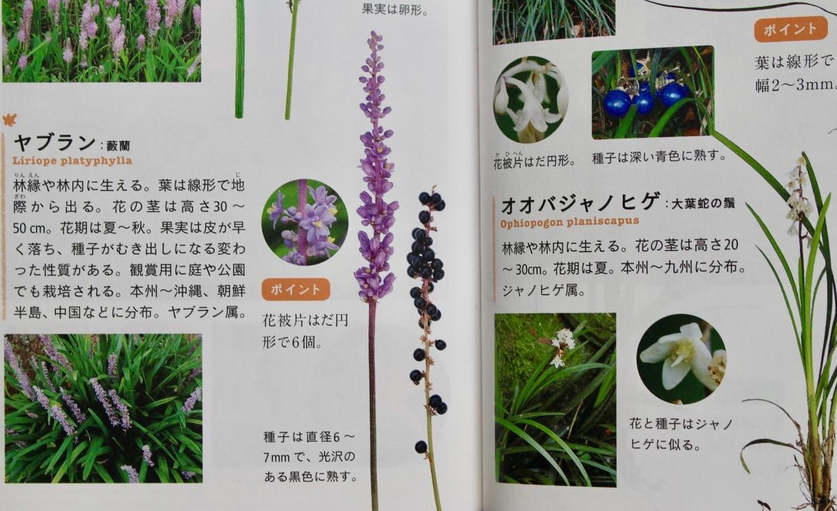 f:id:yatsugatake:20191218094428j:plain