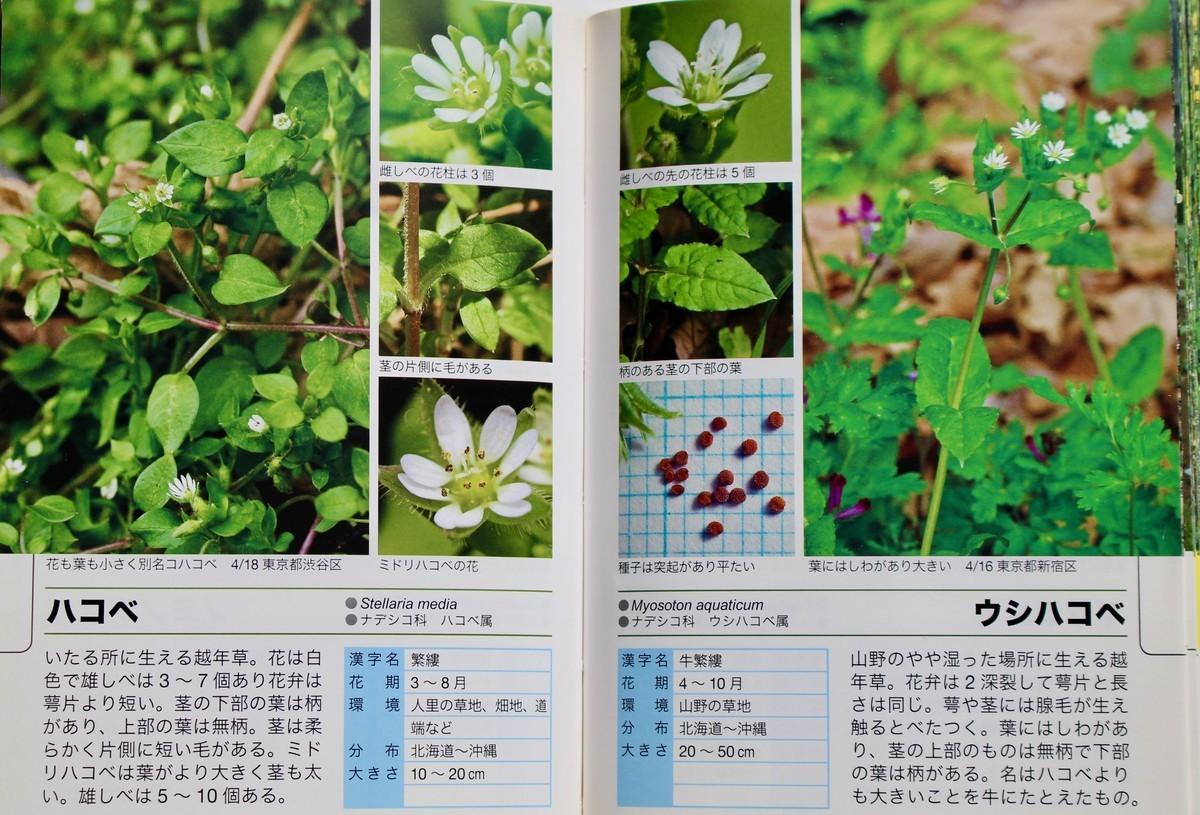 f:id:yatsugatake:20200107101820j:plain