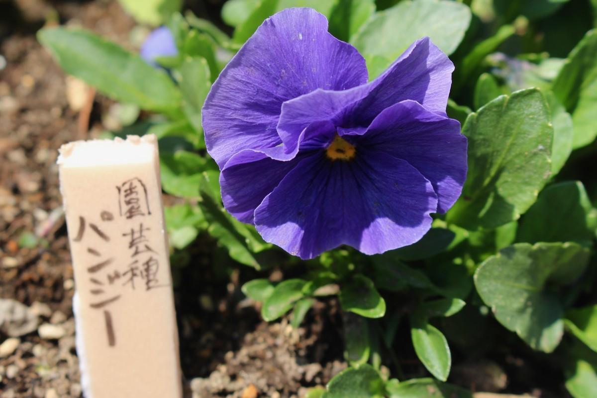 f:id:yatsugatake:20200415113651j:plain