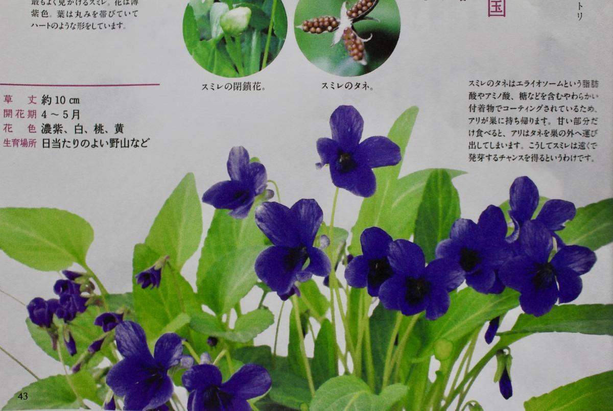 f:id:yatsugatake:20200423185841j:plain