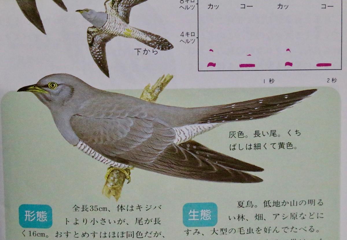 f:id:yatsugatake:20200518183733j:plain