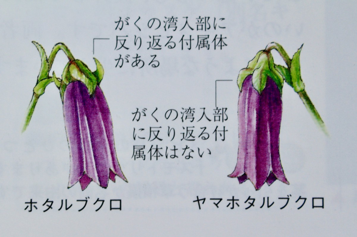 f:id:yatsugatake:20200616143926j:plain