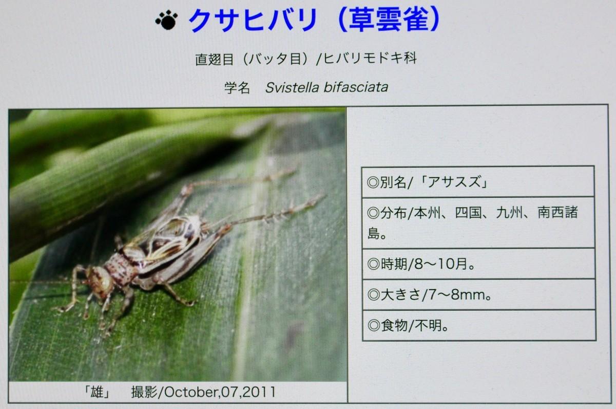 f:id:yatsugatake:20200915075414j:plain
