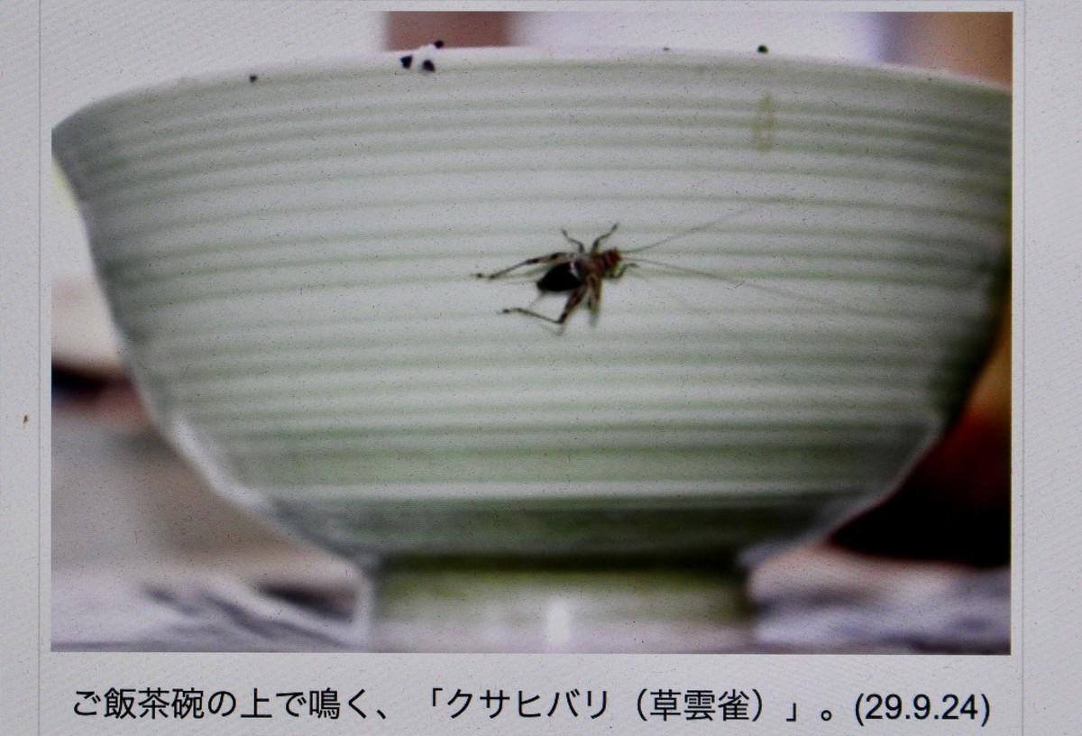 f:id:yatsugatake:20200915080333j:plain