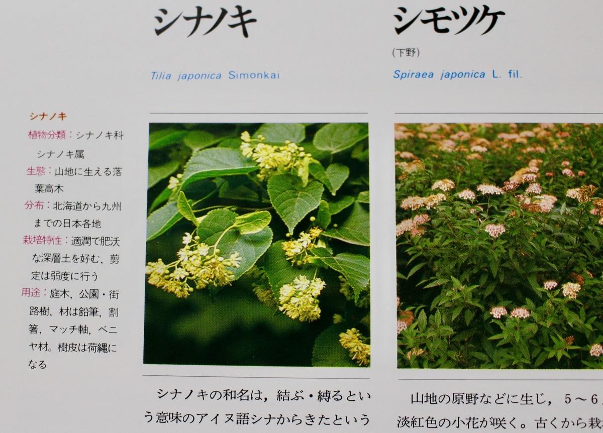 f:id:yatsugatake:20200918172125j:plain
