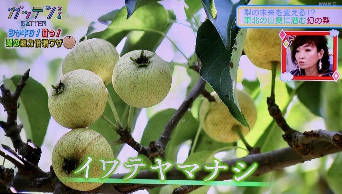 f:id:yatsugatake:20200923201351j:plain