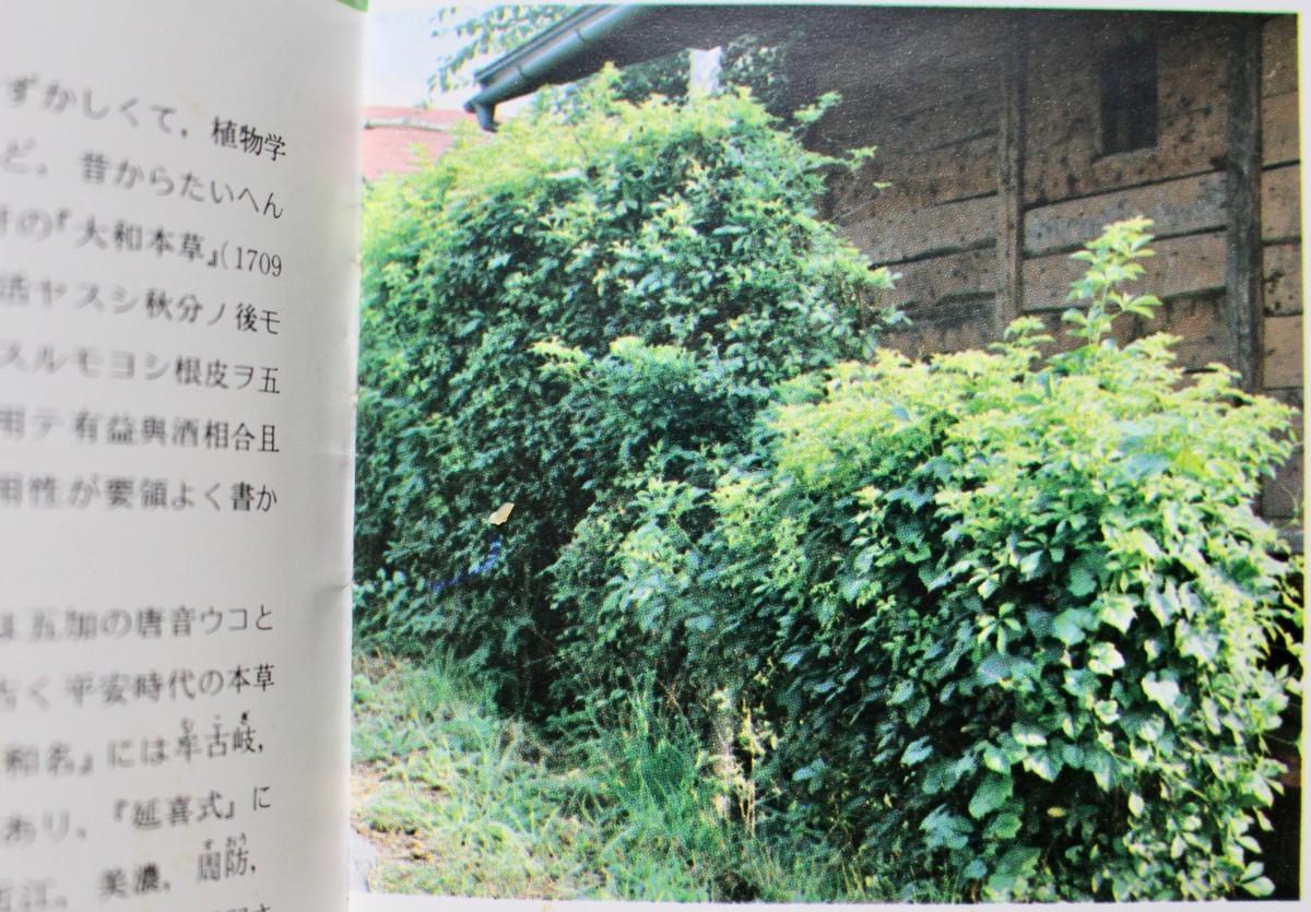 f:id:yatsugatake:20201122200712j:plain