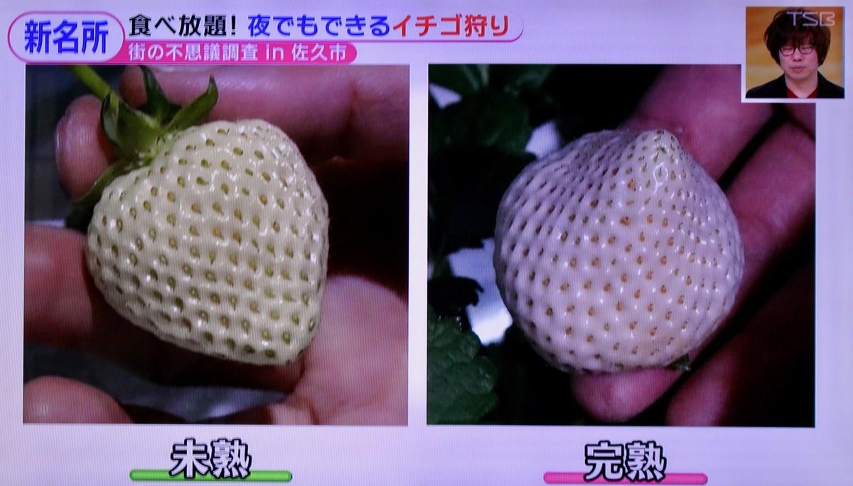 f:id:yatsugatake:20210119161600j:plain