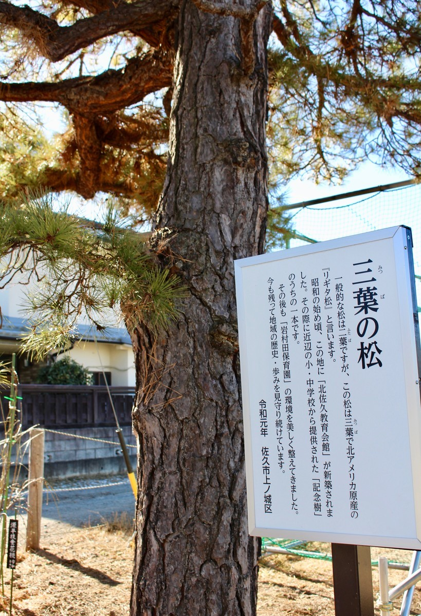 f:id:yatsugatake:20210120124919j:plain
