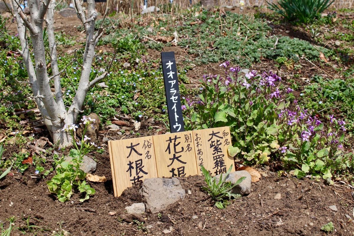 f:id:yatsugatake:20210330114807j:plain