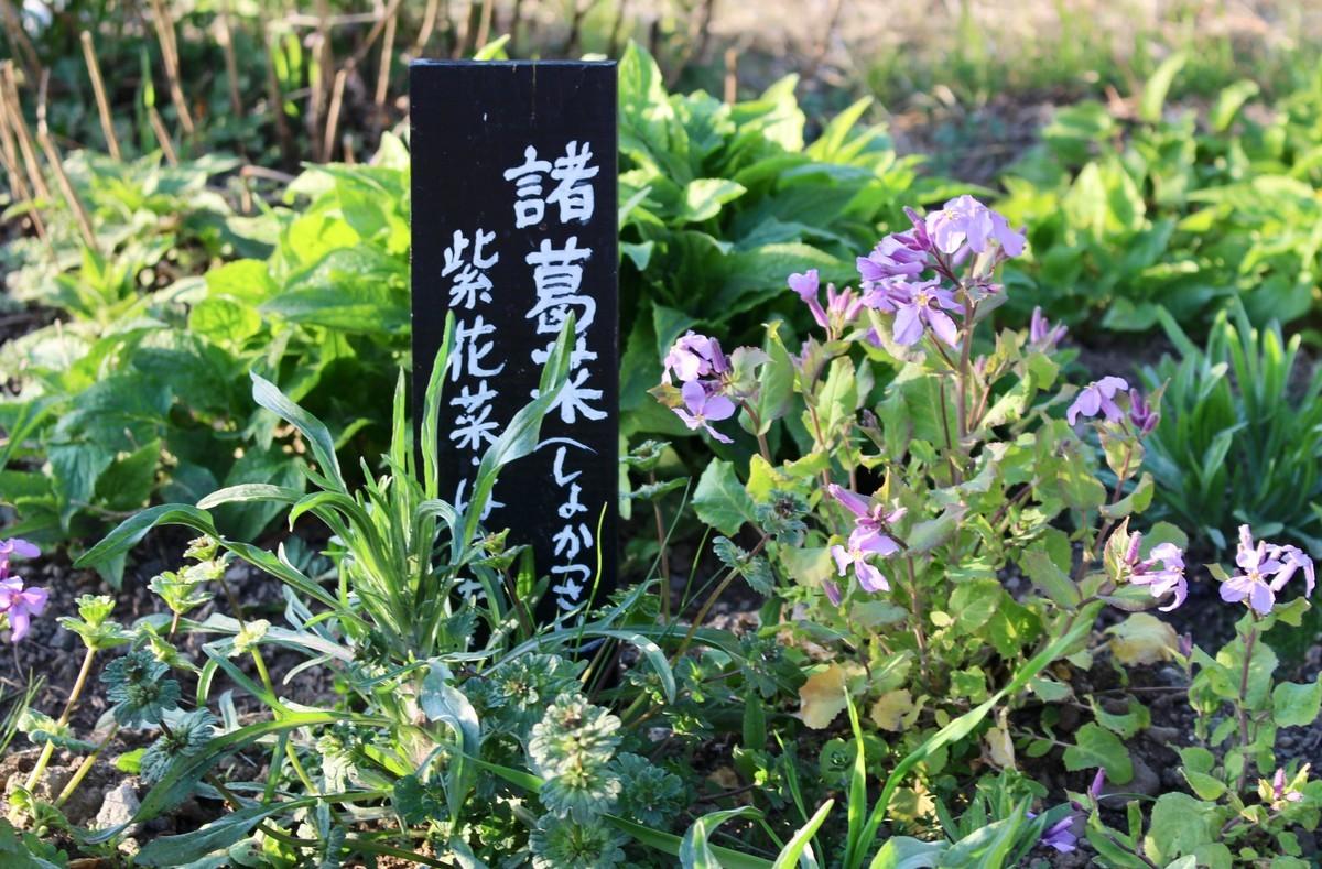 f:id:yatsugatake:20210411170521j:plain