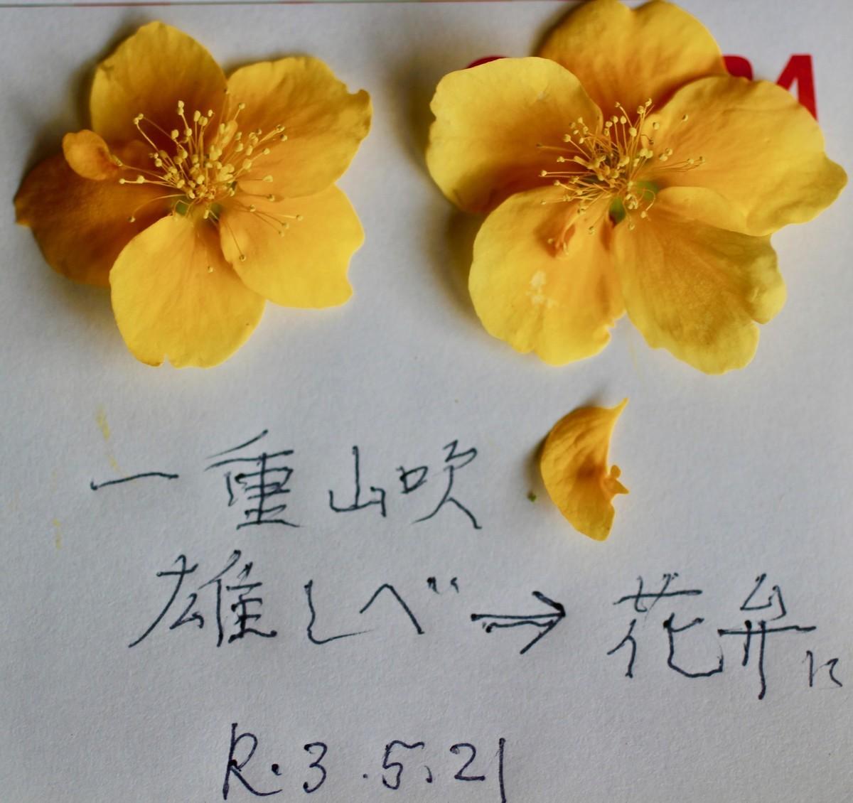 f:id:yatsugatake:20210521115558j:plain