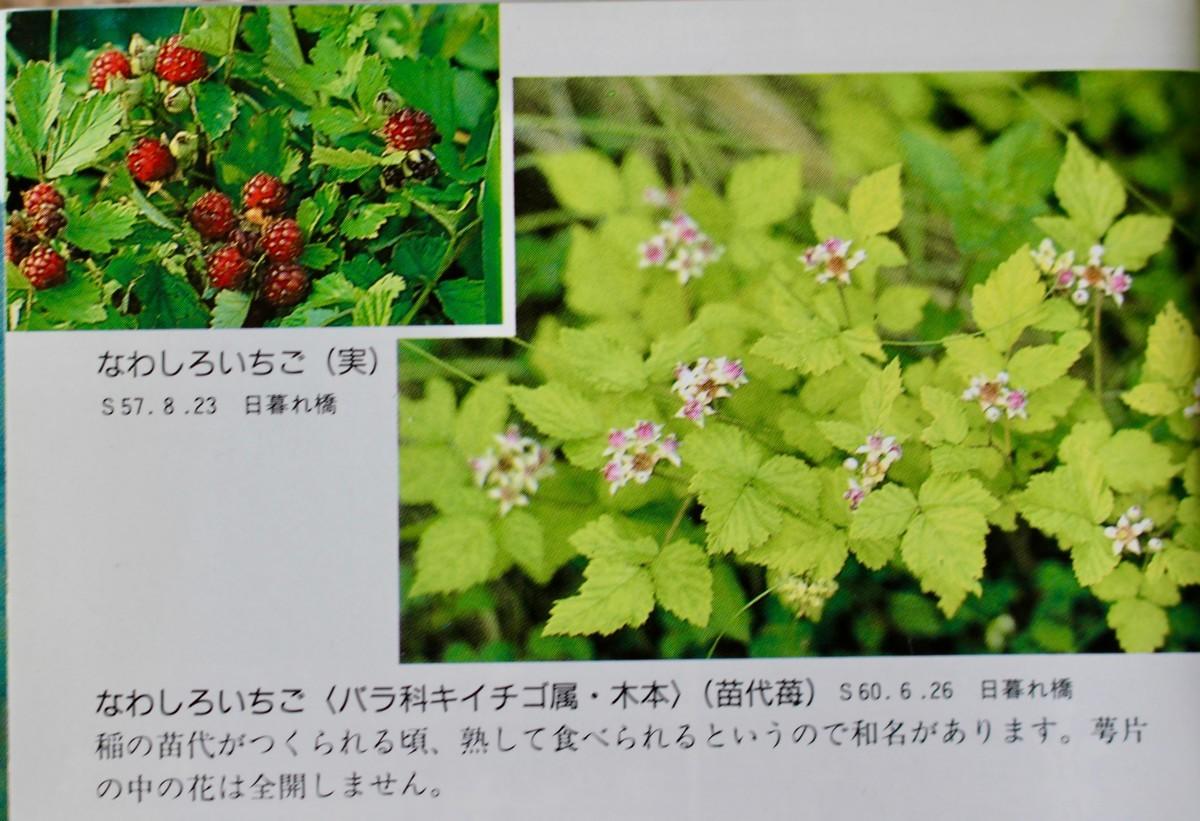 f:id:yatsugatake:20210606105222j:plain