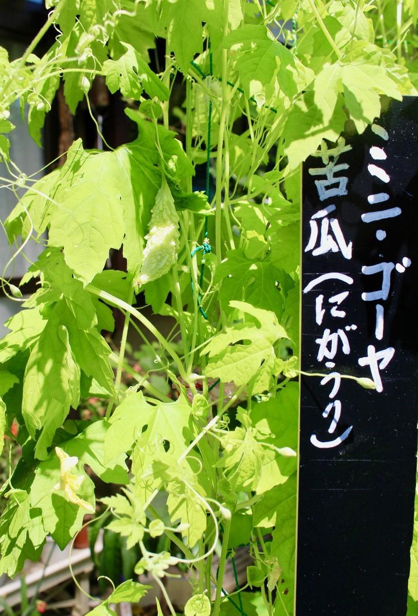 f:id:yatsugatake:20210828122624j:plain