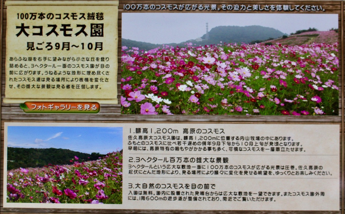 f:id:yatsugatake:20210920154425j:plain