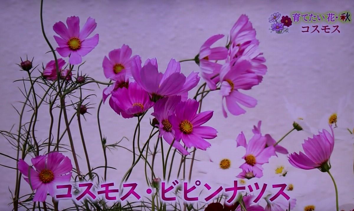 f:id:yatsugatake:20210926084048j:plain