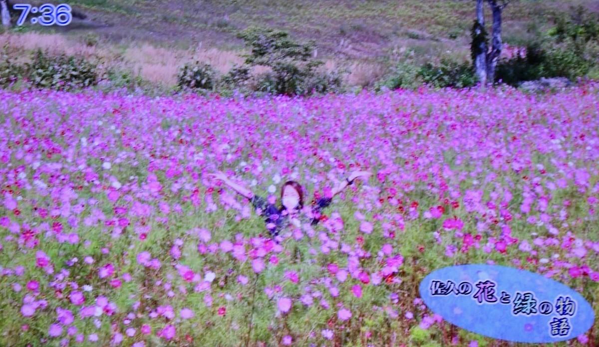 f:id:yatsugatake:20210927101121j:plain