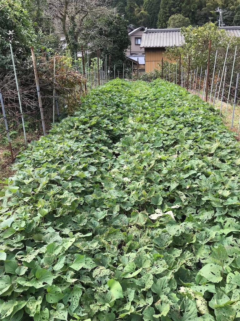 f:id:yatsukura-field:20181022212000j:image