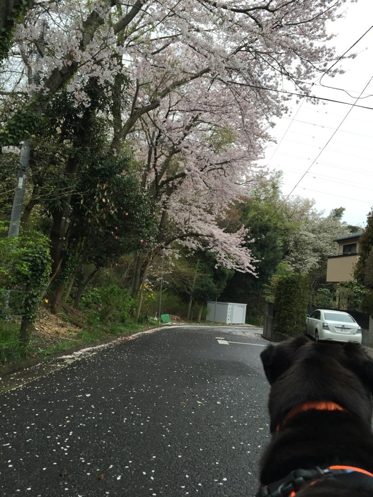 f:id:yawaraka-koinu:20170407081221j:plain