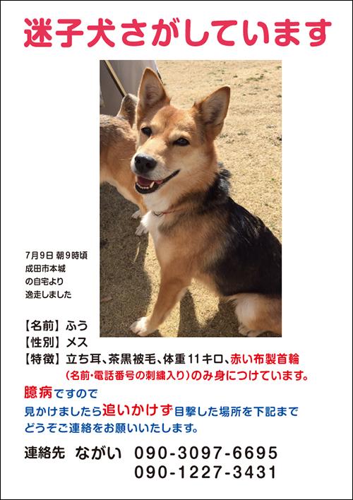 f:id:yawaraka-koinu:20170709174343j:plain